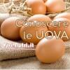 Conoscere le Uova