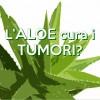 L'Aloe cura i tumori?