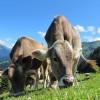 Dove acquisto carne grass-fed?