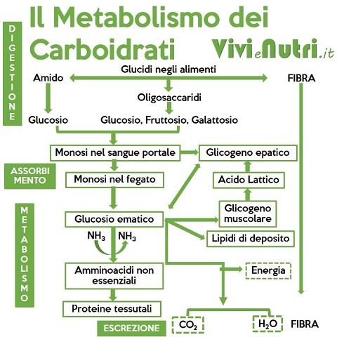digestione assorbimento, metabolismo ed escrezione dei carboidrati