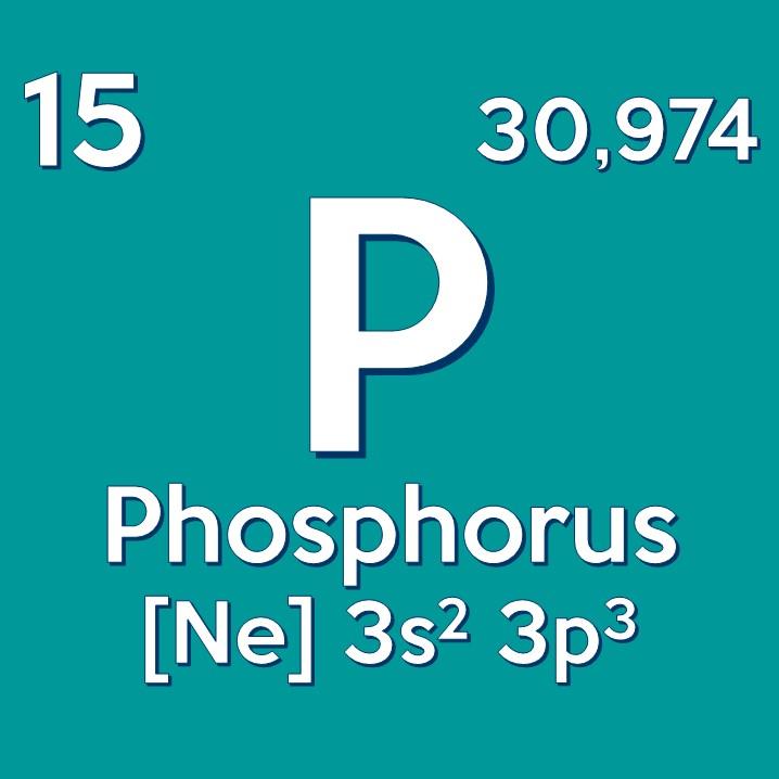 Il fosforo è presente in tutti i tessuti dell'organismo in grandi quantità: circa 12-14 gr per Kg di peso corporeo.