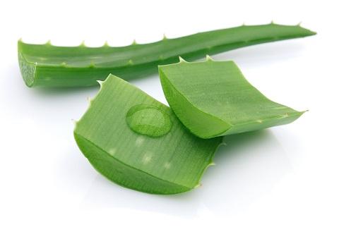 Il gel di Aloe risulta utile in caso di lievi ustioni e irritazioni cutanee.