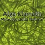 Alga Klamath: Miracolo della Natura?