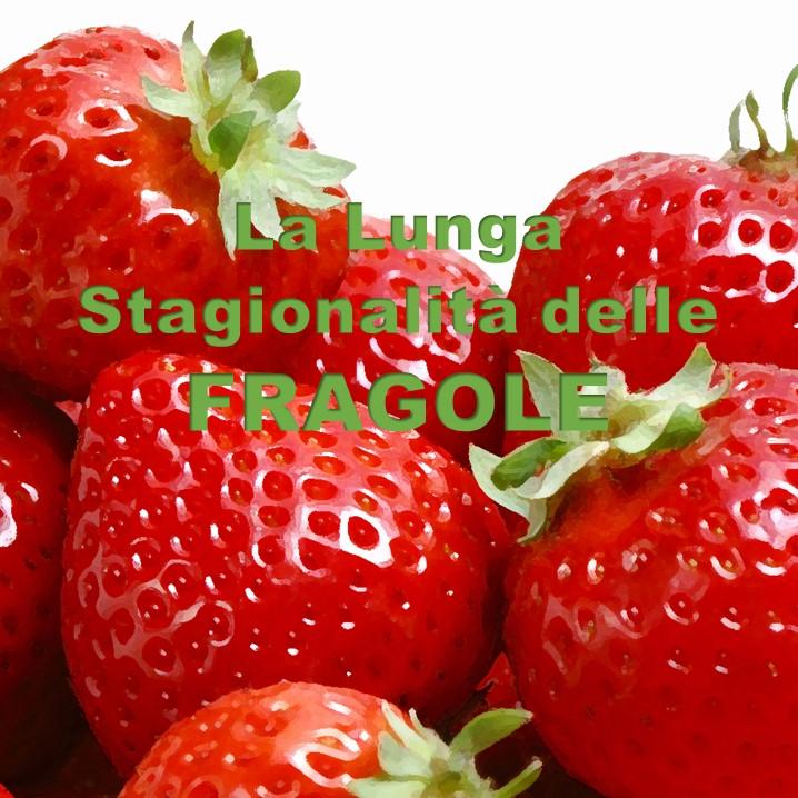 coltivazione, Coltura & Cultura, conservazione, Duccio Caccioni, Fragaria virginiana, fragole, frutta, stagionalità