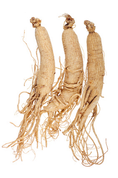 la radice di ginseng