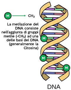 metilazione del DNA