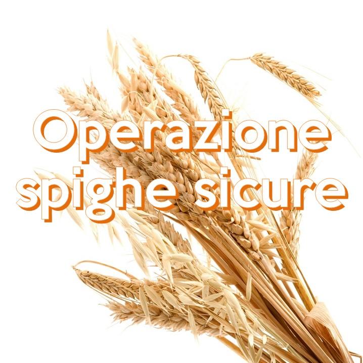 Pane, farina, grano, tutti prodotti naturali, ma naturale vuol dire sicuro? Non sempre e il grano ne è un esempio.