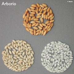 Arborio_.JPG_3830