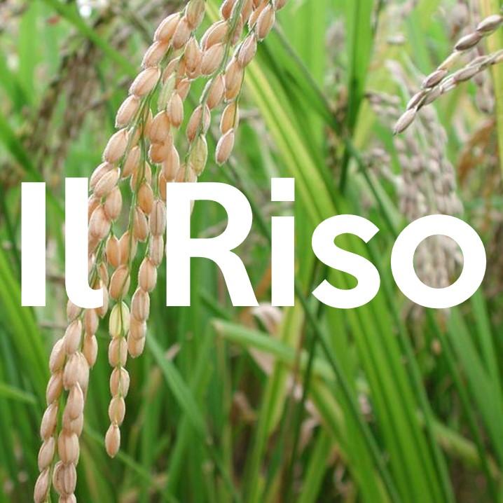 Il riso, come alimento, è utilizzato da circa il 50% della popolazione mondiale e rappresenta circa il 20% delle calorie totali consumate dall'uomo a fini alimentari.