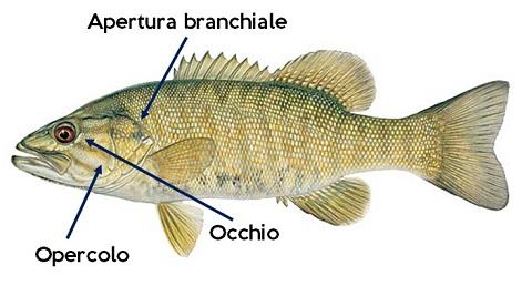 Piccola Guida al Consumo del Pesce Fresco