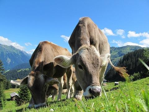 Quali sono le differenze tra carne convenzionale e biologica?