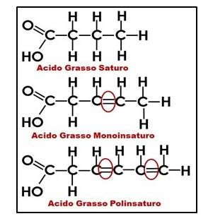 oli-vegetali-vivienutri2
